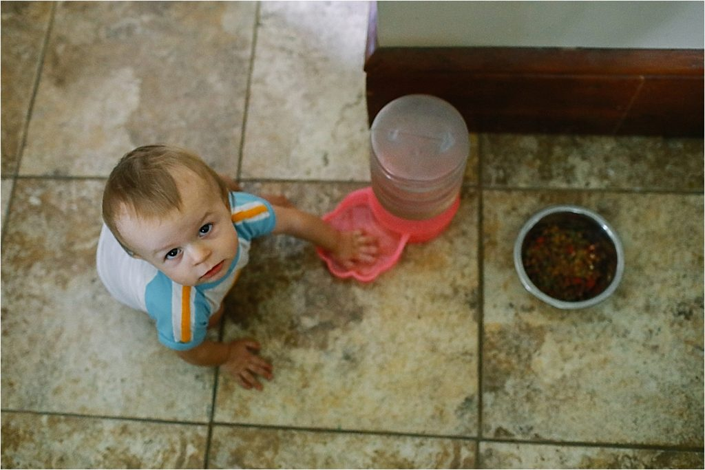 baby plays in the dog food bowl