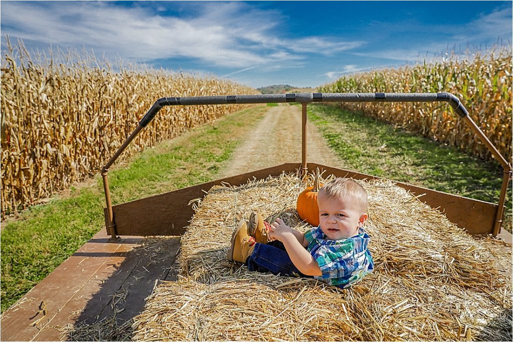 pumpkin patch at reegers pumpkin festival in shelocta pa indiana county