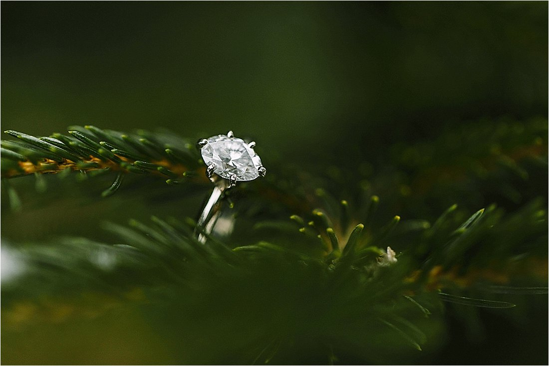 engagement ring hanging from pine tree