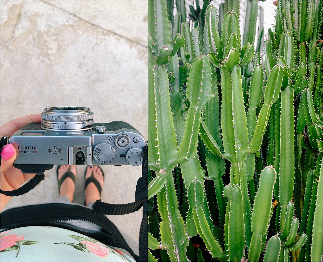 fugi camera and cactus